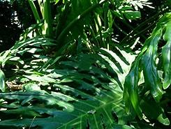 cahier-ecologiquement-responsable